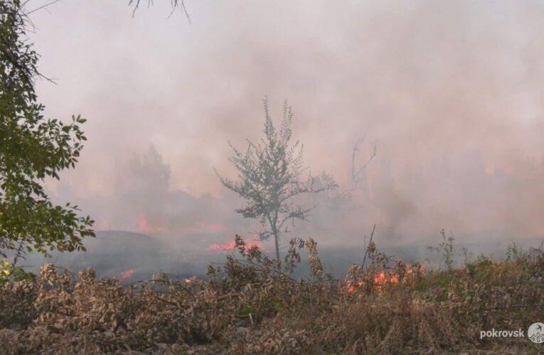 Выжженное поле и обугленные деревья: в Покровске произошел масштабный пожар